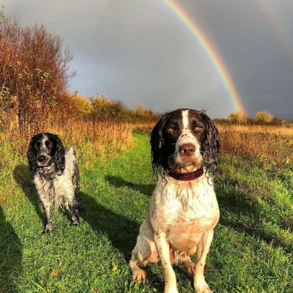 Dog Walker Eastbourne and Hailsham